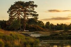 Заход солнца лета над прудом Стоковые Изображения RF