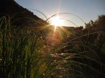 заход солнца лета природы красивейшего вечера горячий очень Стоковые Фотографии RF