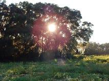 Заход солнца заплаты тыквы Стоковое Изображение RF