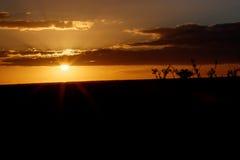 Заход солнца звезды над Addo Стоковые Фото