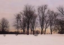 Заход солнца зимы в ботаническом саде Стоковое Изображение