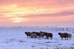 Заход солнца зимы Стоковая Фотография RF