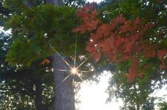 Заход солнца листопада Стоковые Фотографии RF