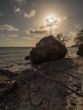 Заход солнца и дерево Стоковое Фото