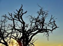 Заход солнца и дерево Стоковое Изображение