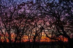 Заход солнца и деревья любят картина Стоковые Фото