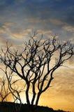 Заход солнца и деревья Стоковые Фотографии RF