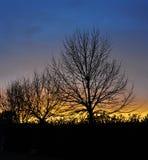 Заход солнца и деревья Стоковое фото RF