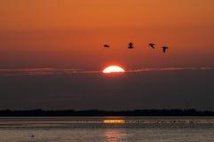 Заход солнца и летящие птицы Стоковая Фотография RF