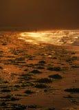 Заход солнца и золотые волны, свет, пляж, море Японии после шторма, Стоковое Изображение