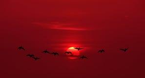 Заход солнца или восход солнца с предпосылкой летящих птиц естественной Стоковое Фото