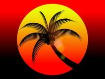 Заход солнца и кокосовая пальма летнего отпуска красный Стоковые Изображения
