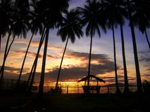 Заход солнца и кокосовые пальмы, Mati, Филиппины стоковые фотографии rf