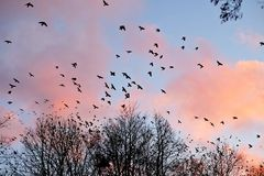 Заход солнца и птицы Стоковые Изображения