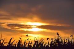 Заход солнца и силуэты птиц Стоковое Фото