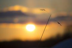 Заход солнца и солома сена Стоковая Фотография
