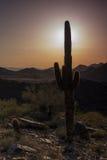 Заход солнца кактуса Стоковая Фотография