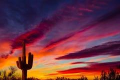 Заход солнца кактуса Saguaro Аризоны Стоковые Изображения
