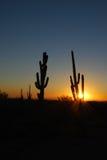 Заход солнца кактуса Saguaro Стоковые Фотографии RF