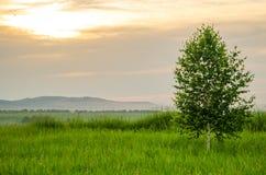 Заход солнца кармазина лета Стоковое Изображение
