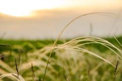 Заход солнца кармазина лета Стоковая Фотография RF