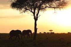 заход солнца Кении Стоковая Фотография