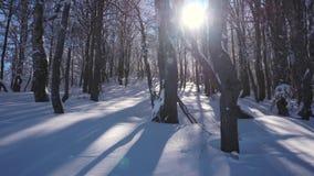 Заход солнца между деревьями сток-видео