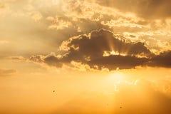 Заход солнца моря с птицами Стоковые Фото