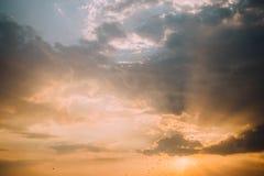 Заход солнца моря с птицами Стоковые Изображения