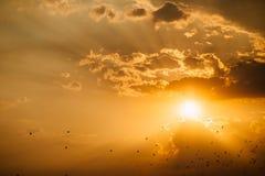 Заход солнца моря с птицами Стоковое Изображение RF