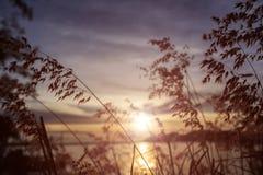 заход солнца модели травы 3d Стоковые Изображения RF