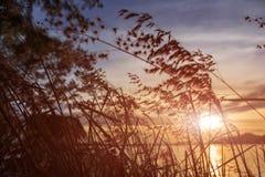 заход солнца модели травы 3d Стоковое Изображение RF