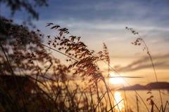 заход солнца модели травы 3d Стоковые Фото