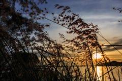 заход солнца модели травы 3d Стоковые Фотографии RF