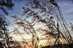 заход солнца модели травы 3d Стоковое Изображение