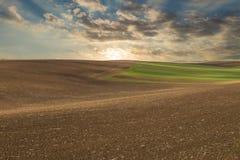 Заход солнца над аграрным полем Стоковые Изображения RF