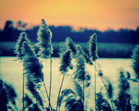 Заход солнца на болоте 2 Стоковые Изображения RF
