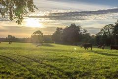 Заход солнца над великобританским полем Стоковые Изображения