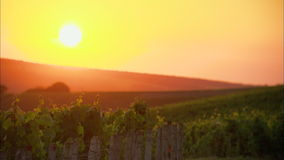 Заход солнца на винограднике в Франции акции видеоматериалы
