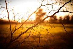 Заход солнца на дереве Braches Стоковые Изображения RF