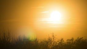 Заход солнца над деревьями и облаками Промежуток времени сток-видео