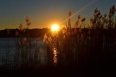 Заход солнца на заболоченном рукаве реки Стоковые Изображения