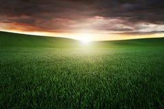 Заход солнца над зеленым полем Стоковое Фото