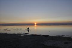 Заход солнца над морем и собакой Стоковое Изображение