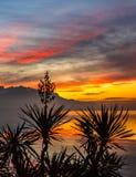 Заход солнца над некоторыми горами с пальмой в фронте Стоковое Фото