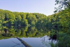 Заход солнца на озере пущи Стоковое Изображение