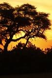 Заход солнца над перепадом Okovango Стоковое Изображение RF
