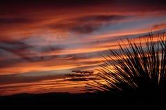 Заход солнца на перспективе Sotol Стоковое Изображение RF