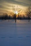 Заход солнца над полем. Стоковое фото RF