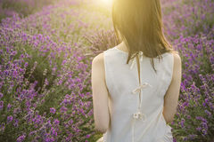 Заход солнца на поле лаванды Стоковые Фото